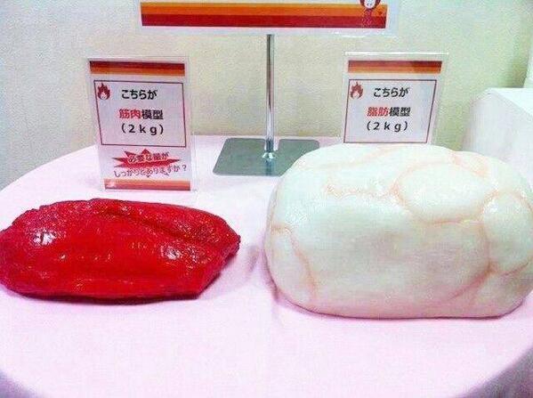 筋肉2kgと脂肪2kgの模型図